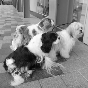 three_dogs_bw_sij