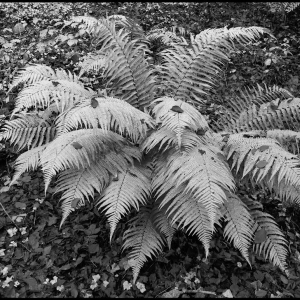 Fern and fallen leaves