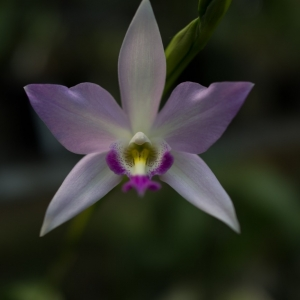 Orchid_in_the_middle_1_of_1_