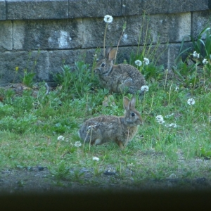 Rabbits_FZ150_002_Medium_