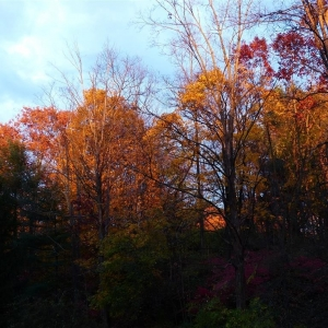 fall_foliage_005_Medium_