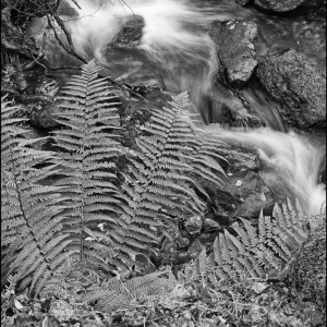 Fern, leaves and torrent