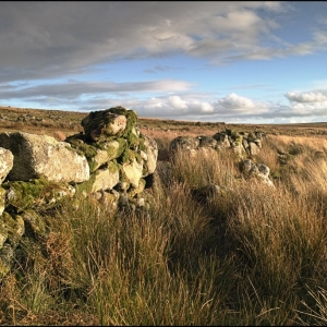 Ruined wall on Trowlesworthy Warren