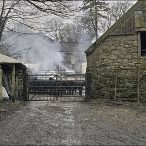 Collyton farm, penned calves and bonfire