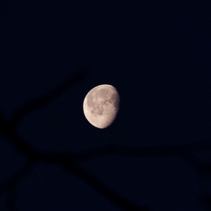 FZ200_shooting_the_moon_009_Medium_