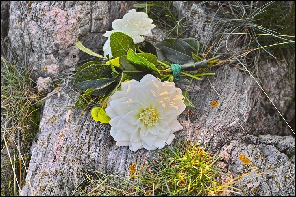 A posy in the rocks