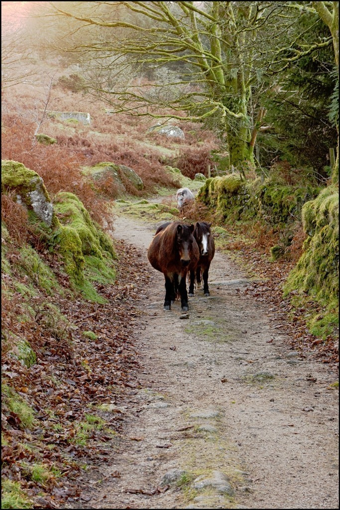 Ponies on the path