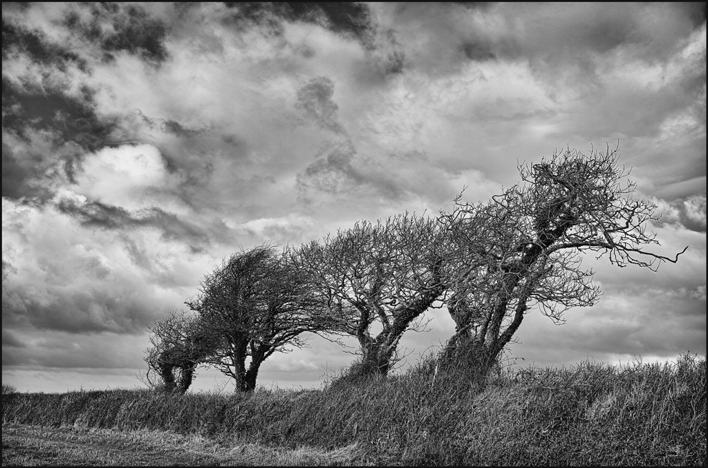 Windblown trees and cloud